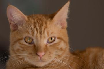 catday.jpg