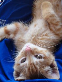 babycat.jpg
